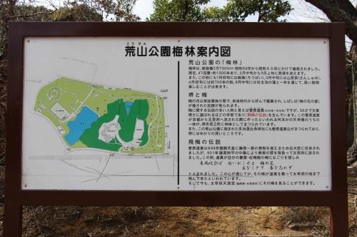 荒山公園梅林