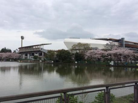 20160403池越しに桜と等々力陸上競技場を見る画像