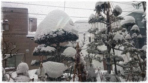雪DSC_3213
