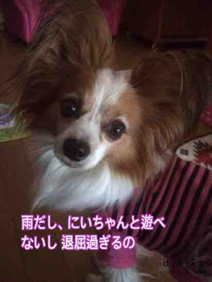 fc2blog_20160220181324911.jpg