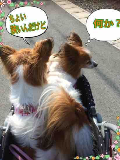 fc2blog_2016032420493216f.jpg