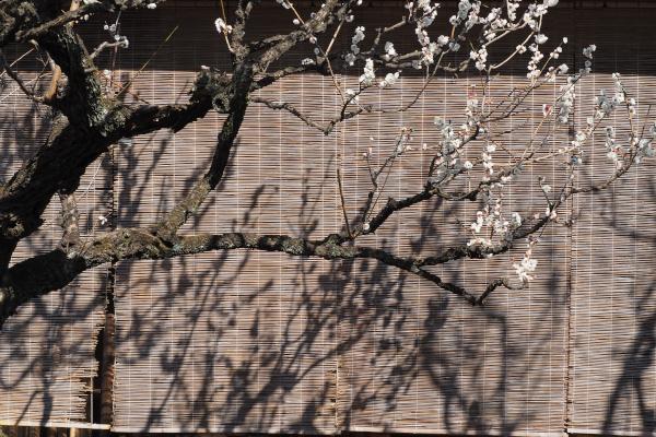 つかちゃん春の陽を浴びて