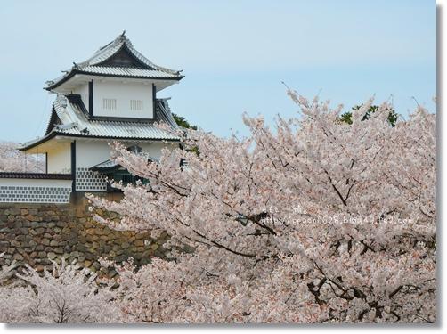 金沢城と桜2014 047