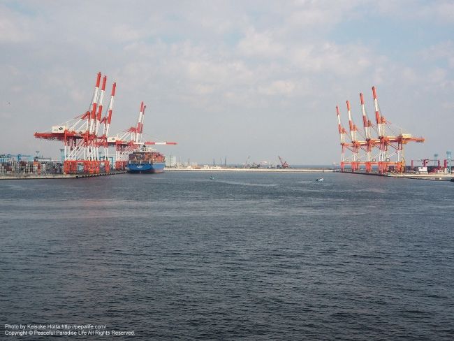 横浜港磯子湾(根岸湾)のキリンの群れ