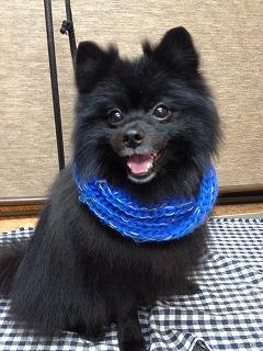 2015-12-29 岩田 熊之助2