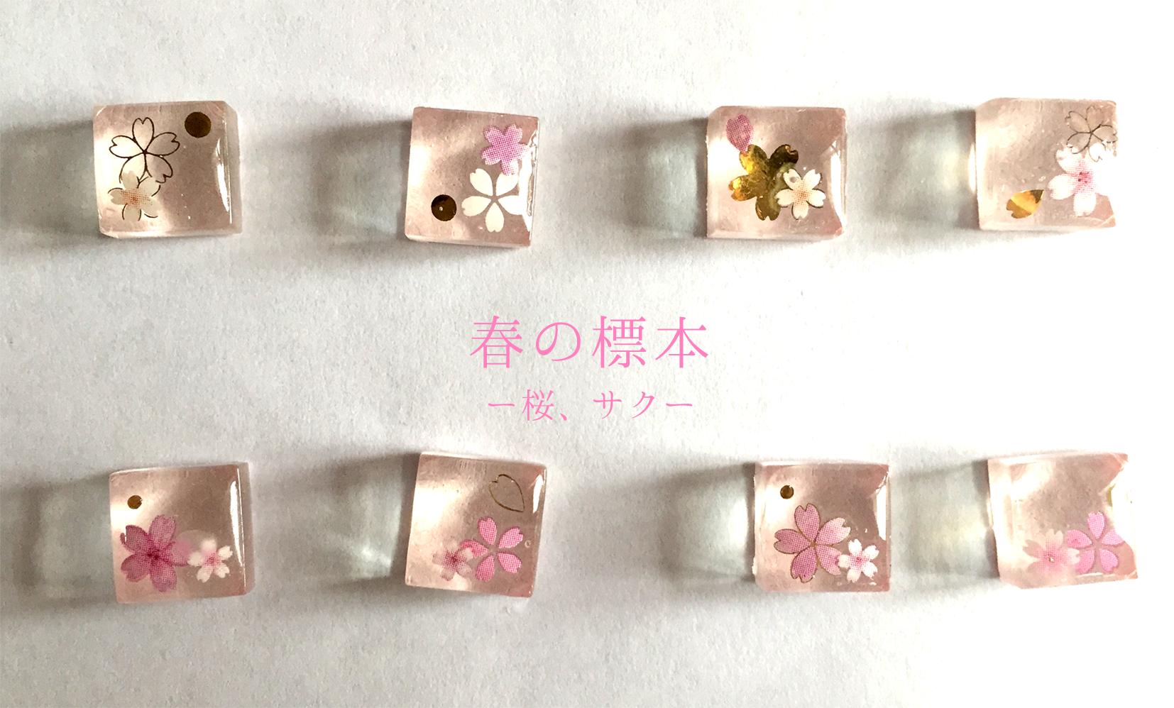 sakura_01_01.png