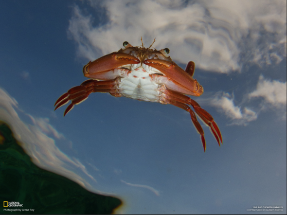 StrangePlanetFlyingCrab-590x442.png