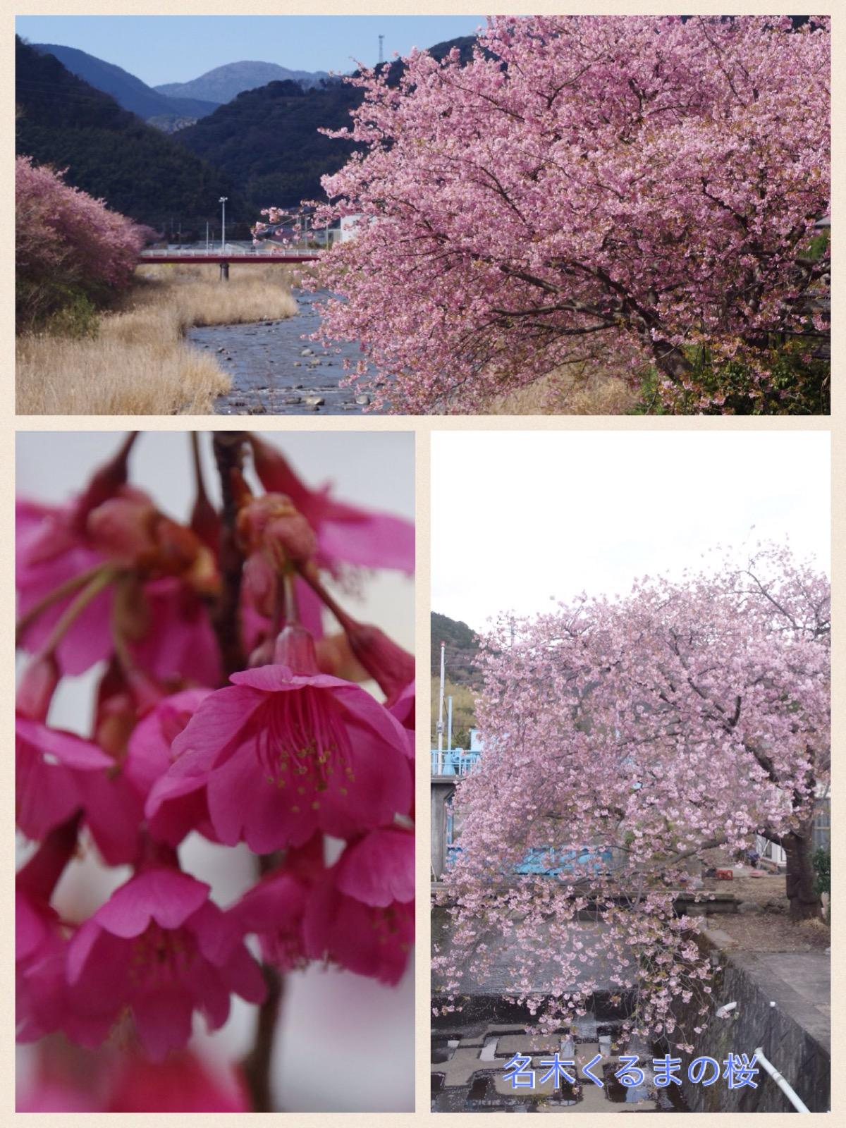伊豆河津町 河津桜祭り2016