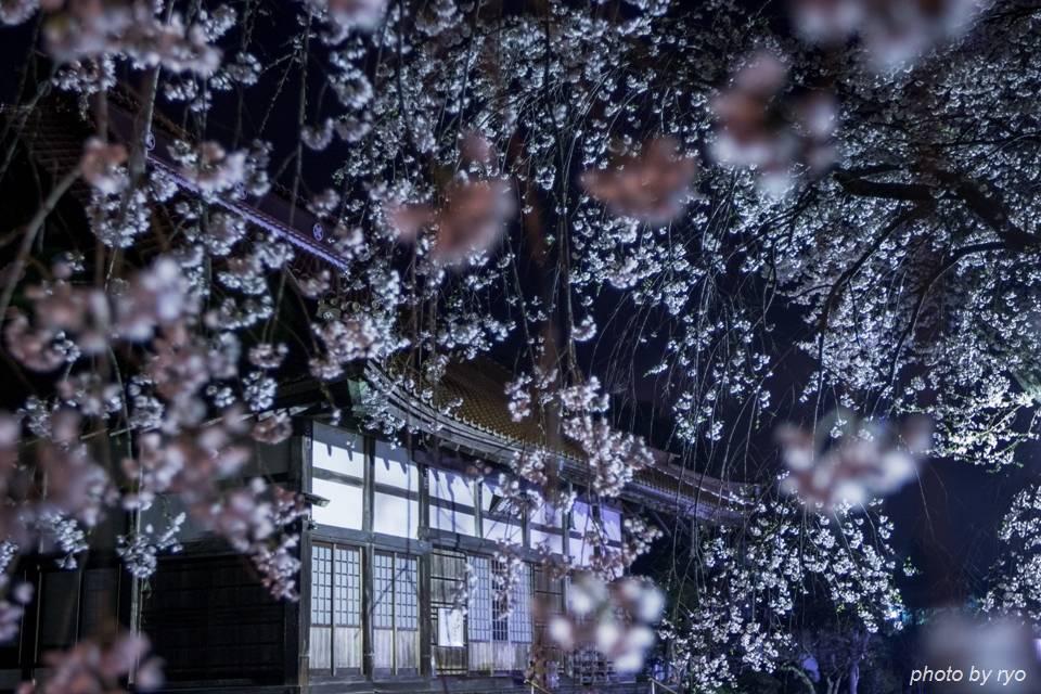 鳳源寺の枝垂桜 2016_3