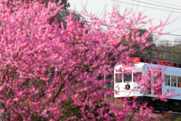 2009年2月 和歌山電鐵貴志川線 山東~大池遊園