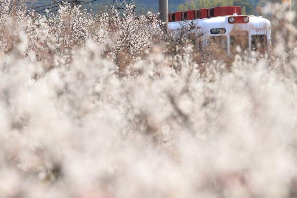 2012年3月 和歌山電鐵貴志川線 伊太祈曽~山東