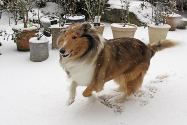 雪IMG_1600