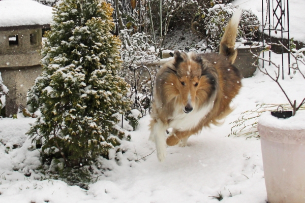 雪IMG_1638