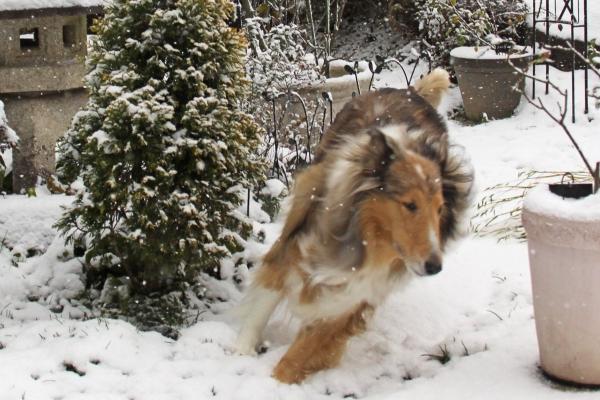 雪IMG_1639