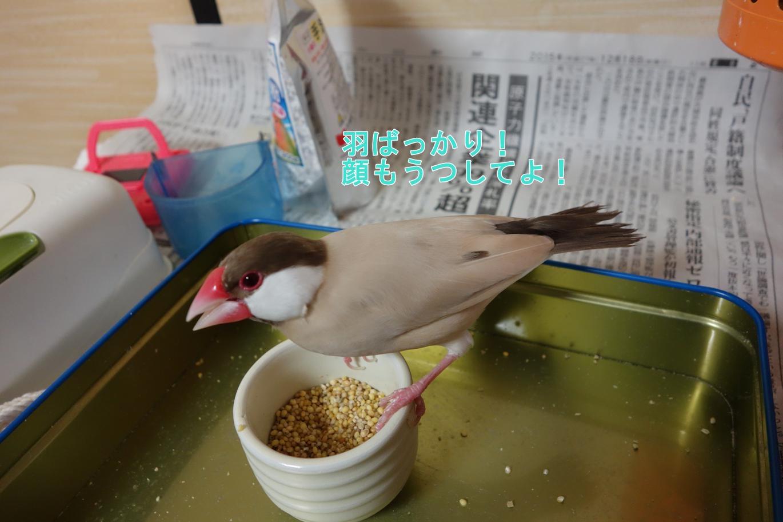 160208_お顔