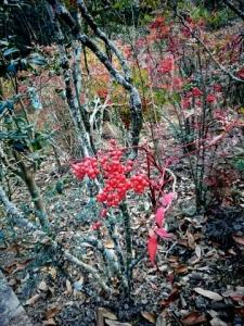 昭和の森3