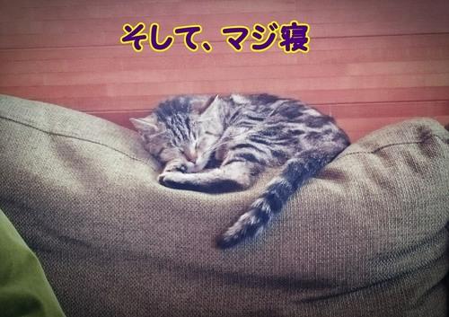 寝ちゃった・・