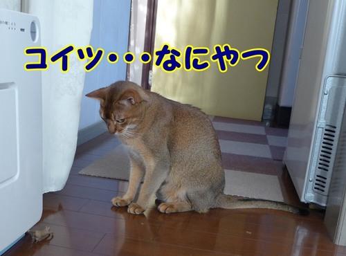 猫ヤツです