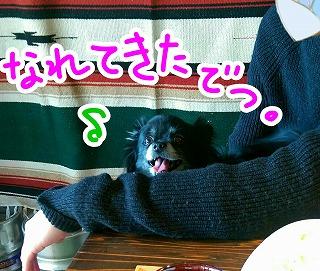 2016-02-22_21_44085.jpg
