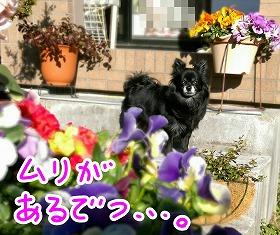 2016-03-01_23_44481.jpg
