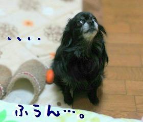2016-03-31_22_46513.jpg