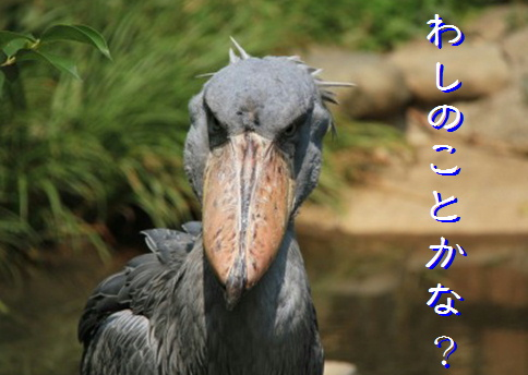 blog20160306-6.jpg