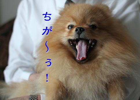 blog20160306-7.jpg