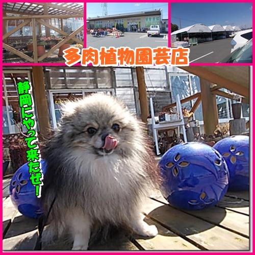 in shizuoka