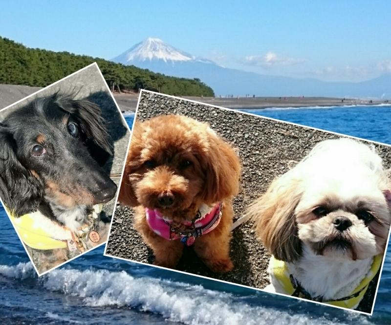 miho-fuji-Link-Luck-Merry-DSC_0055decos.jpg