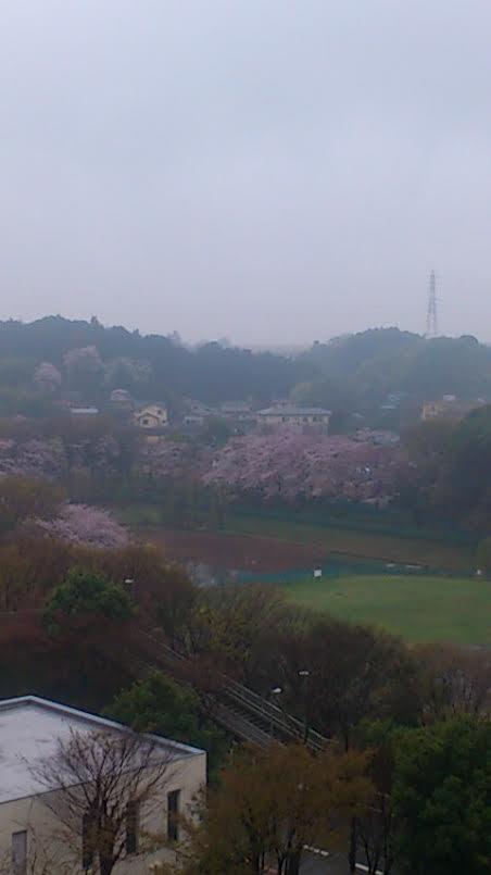 桜2016(2)