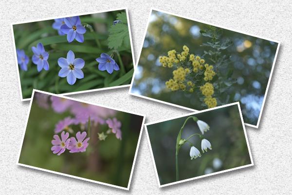 春らしい花々