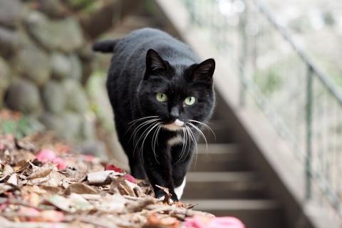 バットマン猫