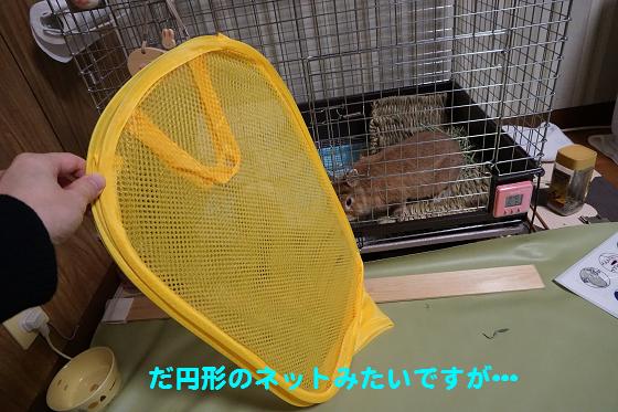 ぴょん子160219_00