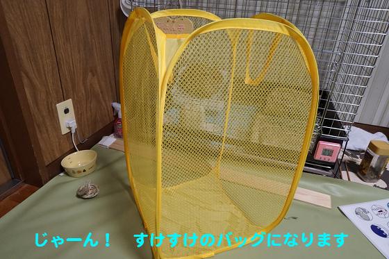 ぴょん子160219_02