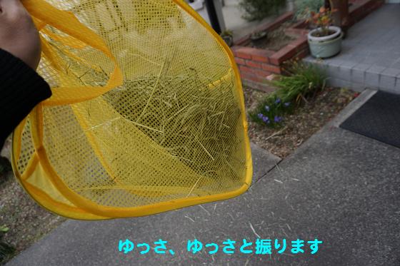 ぴょん子160219_04