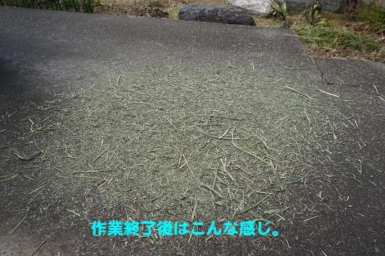 ぴょん子160219_06
