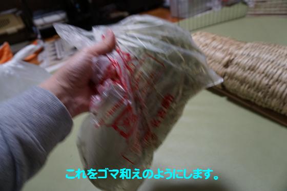 ぴょん子160309_05