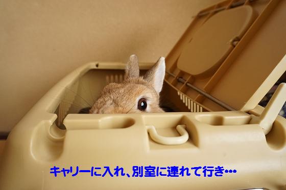 ぴょん子160315_00