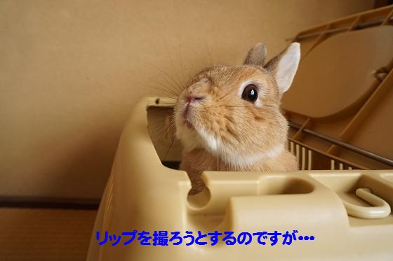ぴょん子160315_01