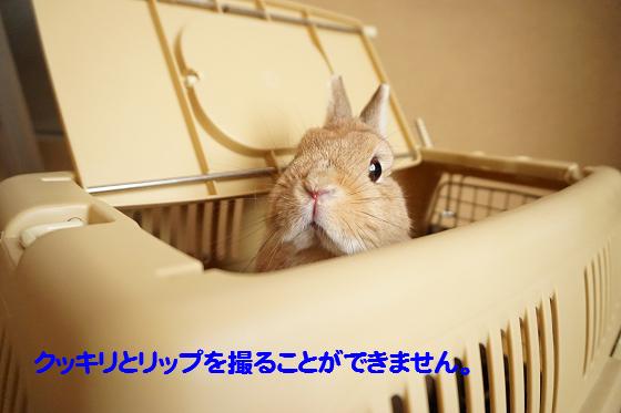 ぴょん子160315_03