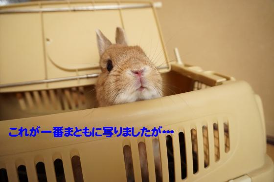 ぴょん子160315_04