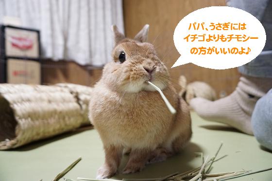 ぴょん子160318_00