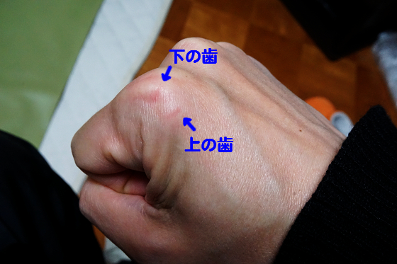 ぴょん子160317_00