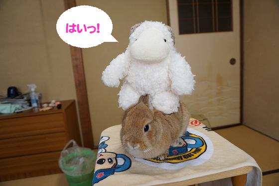 ぴょん子160330_06