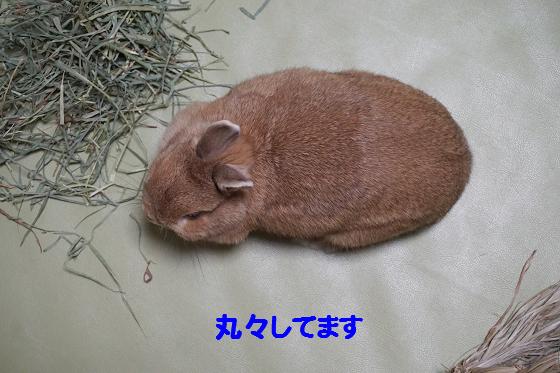 ぴょん子160404_01