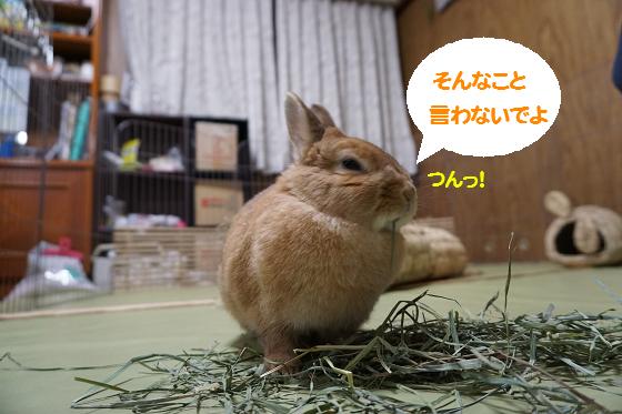 ぴょん子160404_02