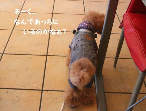 IMG_88762.jpg