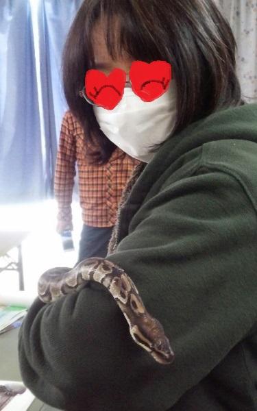 ボールニシキヘビを抱っこ
