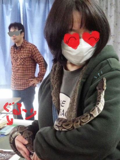 ボールニシキヘビさんこんにちは(^^)