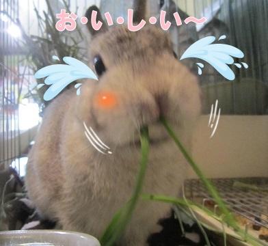 chinkun20160325-2.jpg
